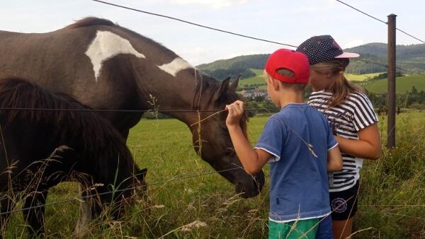 Dzieci głaskają konie.